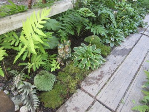 Japense ferns from Anita - LOVE and they reseed all over the place